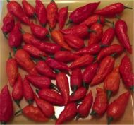 Fresh Bhut Jolokia Pods 100 Pounds