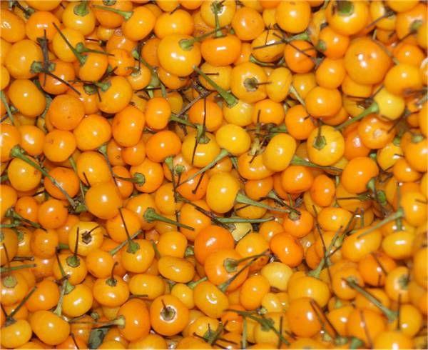 Fresh Aji Charapita Pods